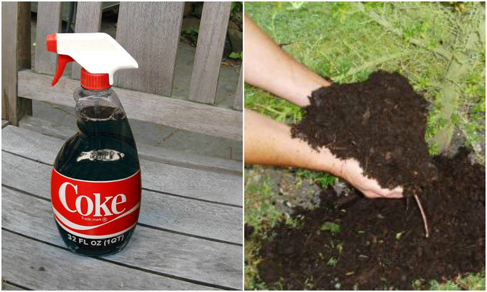 Pest Control on small home Farms with Coca-Cola